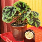 Stem and Leaves - House plants online - Indoor plants dubai