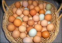 Healthy Macaws, Parrots, Cockatoos, Conures, Amazons and fertile eggs for sale